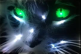 möbel wohnen bilder drucke led bild beleuchtet katzen