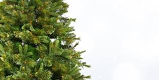 Kinds Of Christmas Trees by Shop Christmas Trees At Lowes Com