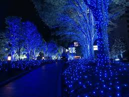 Flocked Christmas Trees Vancouver Wa by Christmas In Japan Dwell Pinterest Japan Blue Christmas