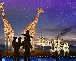 Zoo Christmas Lights Phoenix Az