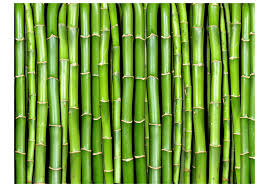 vliestapete imitation einer bambuswand