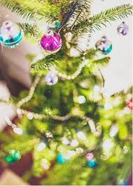 Xmas Tree Waterer by How To Care For A Freshly Cut Christmas Tree
