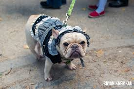 Tompkins Square Park Halloween Dog Parade 2015 by Dogs Skapunkphotos Com