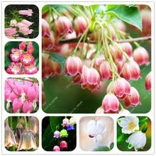 buy perennial flowers bulbs and get free shipping on aliexpress