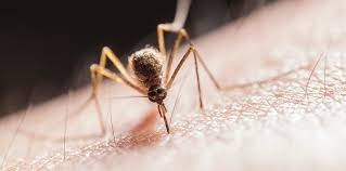 was hilft gegen mücken hilfreiche tipps tricks gutefrage