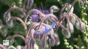eine besondere wildblumenwiese steht derzeit in weinzierlein im landkreis fürth in voller blüte kornblumen disteln dill und malven wachsen hier ohne abgemäht zu werden landwirte jäger und imker