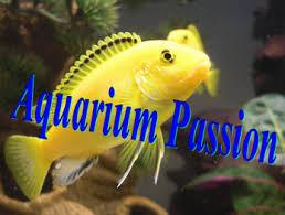 poisson eau douce aquarium tropical accueil aquarium site de poisson tropicaux d