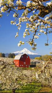 Country Living - Spring, Flowering Trees, Barn | Loving The ... Herb Apple Gruyere Scones Now Forager The Best Picking Near Atlanta In Map Form Tennessee Seerville Barn Orchard Winesap Apples 18 Bushel Red Orchards Mt Hood Stock Image 24641381 Orchard Front Mount Photo 27690034 Shutterstock Winery Elkhorn Wi Barnquilt Appleorchard Mapping Georgias In Time For Fall Splendor Experience Autumn At Edwards West