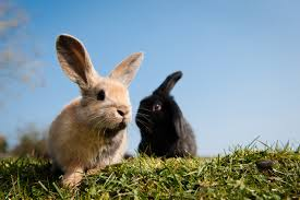 Can Rabbits Eat Pumpkin Seeds by Can Rabbits Eat Cucumber