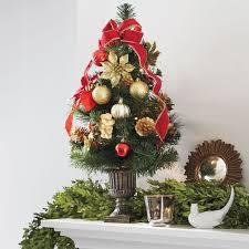 Plantable Christmas Trees Columbus Ohio by 24