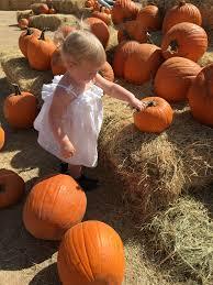 Old Mcdonalds Pumpkin Patch Scottsdale by Pumpkin U2013 I Am Justaudrey Blog