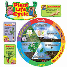 Flower Story Game For You Plant Life Cycle Mini Bulletin Board