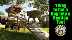 1 Way To Get A Dog Into A Rooftop Tent - A Ramp - YouTube Amazoncom Pet Gear Travel Lite Bifold Full Ramp For Cats And Extrawide Folding Dog Ramps Discount Lucky 6 Telescoping The Best Steps And For Big Dogs Mybrownnewfiescom Stairs 116389 Foldable Car Truck Suv Writers Fun On The Gosolvit Side Door Tectake Large Big Dogs 165 X 43 Cm 80kg Mer Enn 25 Bra Ideer Om Ramp Truck P Pinterest Building Animal Transport Solution With 2018 Complete List Of 38 With Comparison