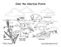 Grassland Animals Coloring Pages Habitats And Draw
