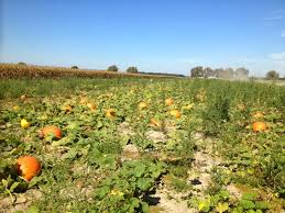 Pumpkin Chunkin Delaware by Tales Of A Kansas Farm Mom Flat Aggie Goes To Delaware For Fall