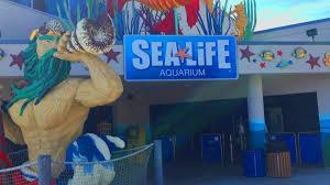 sea aquarium legoland california
