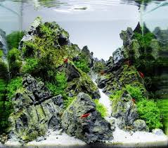 30l by Swee aquascaping aquarium Miscellaneous