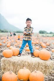 Kohala Pumpkin Patch Hours by Pumpkin Patch Oahu 2015