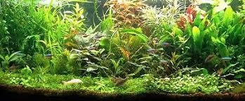 plante axo collection on ebay