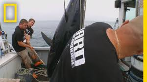 Did Hard Merchandise Sinks by Catch Of The Week Go Hard Or Go Home Wicked Tuna Youtube