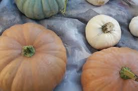 Carolyns Pumpkin Patch Kc by Little Mrs 716 U2013 A Lifestyle Blog