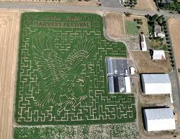 Sauvies Island Pumpkin Patch Corn Maze by Vote For The Best Corn Maze Around Portland Poll Halloween 2015