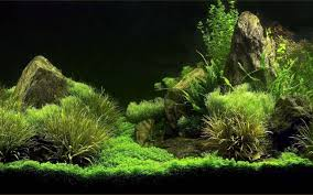 Aquarium Backgrounds Pictures - Wallpaper Cave Hamsa Wabikusa Style Aquascaping World Forum Httpwww Nature Aquarium And Aquascaping Wiki 25l Nano Capa 2011 French Aquascapers Results My Scape Iaplc Rank 70 The Passing Of Legend Takashi Amano Magazine With Nicolas Guillermin Surreal Submarine Amuse Aquascape The Month August 2010 Beyond Riccardia Chamedryfolia Question This Is Ada 2009 Susanna Aquascape Garden Bonsai Plants