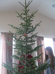Rice Krispie Christmas Trees Uk by Almost Unschoolers Christmas Science For Kids Identifying The Tree