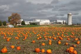 Pumpkin Picking Farms In Maryland by 10 Best Pumpkin Patches In Maryland That Are Perfect For Fall