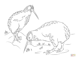 Tremendous Kiwi Animal Coloring Pages Click The Little Spotted To View Printable Version Or Color