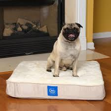 Serta Dog Beds by Serta Pet Beds True Response Memory Foam Dog Bed In Cream Reviews