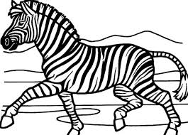 Splendid Zebra Coloring Pages Category