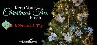 Christmas Tree Preservative Recipe by How To Keep A Christmas Tree Fresh Naturally The Essential Family
