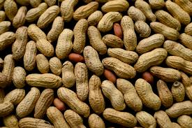 Bay Area Company Finds Possible Treatment For Peanut Allergies - SFGate Greece Grapes Stock Photos Images Alamy 21 Best Rc Tt02t Truck Images On Pinterest Car Wheels Rc Cars Jeep Xj Polyurithane Engine Mounts Youtube Amazoncom Sunshine Nut Company Sprkling Of Salt Cashews 4 Packs Roasted Almonds The Signature Nuts An 01190eb2 Erection And Maintenance Handbook Tbm3 Airplane Pages Sca 4x4 Mudguards Ned Kelly Pair 280 X 350mm Supercheap Auto Teslas Power Plant Wheels Wont Upend Trucking New Equipment Soft Egg At Ludd Had Mine The Side Portland Debbie Shes Stock But She Sure Is Purdy Toyota Tundra Forum Pre School Osmotherly Family Adventure Heavywhalley Just Another Wordpresscom Site Page 327