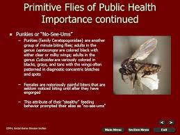 Primitive Flies Of Public Health Importance Continued