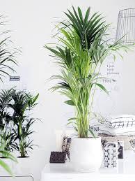 die richtige zimmerpflanze für das schlafzimmer pflanzenfreude