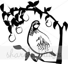 Black and White Partridge in a Pear Tree Clipart