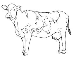More Images Of Cow Coloring Page Posts