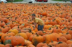 Shady Lane Farm Pumpkin Patch by Apple Picking Vacationing With Kids Part 2