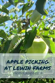 Pumpkin Patch Tulsa Groupon by The 25 Best Apple Picking Long Island Ideas On Pinterest Apple