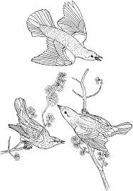 Bird Coloring Pages For Adults Printable