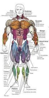 interieur corps humain femme interieur corps humain 100 images le rein le système urinaire