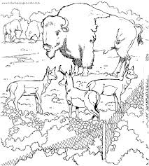 Colouring Pages Coloring Zoo Animals