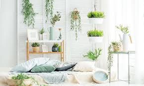 pflanzen als alternative welche luftbefeuchter mit keimen