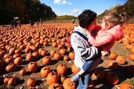 Pumpkin Patch Fort Wayne 2015 by Pumpkin Picking Demarest Farms Orchard Farm Store U0026 Garden Center