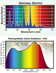 how light is measured lighting spectrum and photosythesis