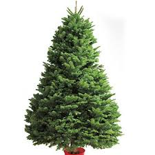Plantable Christmas Trees Nj by Types Of Real Christmas Trees The Home Depot