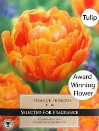 60 orange princess bulbs tulips ebay