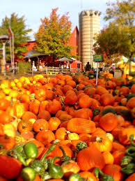 Best Pumpkin Farms In Maryland by 12 Best Pumpkin Patches Around Chicago Images On Pinterest