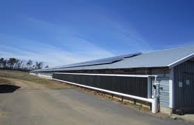 Auburn University Poultry Science | Exploring Solar Power For ... Alexander County Nc Poultry Farm And Historic House Barn Doors Eyeem Stepping Into Steryear At The Blue Earth Fairgrounds Best Meal Of 2016 Hill Stone Barns Eat Sleep Motlow George Dickel Manchester Bonnaroo Coffee Under Contract Big Cabin 100 Acres Oklahoma Land Elkuntryhescom Online 22000 Chickens Killed In Ashland Fire Fox8com 6 Broiler The Elrod Group 79 Best Pet Oh Boy Images On Pinterest Boys Chicken Commercial Buildings King City Lumber Mound